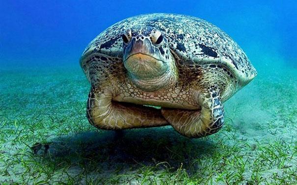 Displeased Sea Turtle Is Displeased