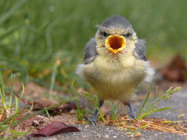 Angry Bird Is Angry
