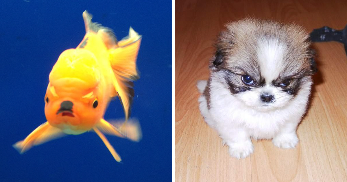 128 Of The Angriest Animals Ever That You Wouldn't Want To Meet In Your Way