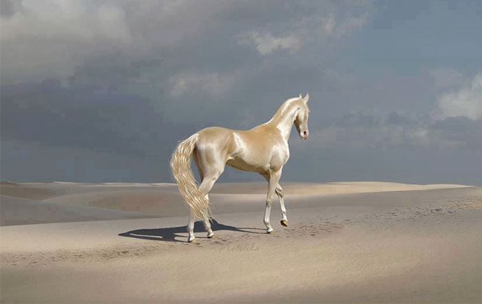 beautiful-horse-shiny-blonde-hair-akhal-teke-2