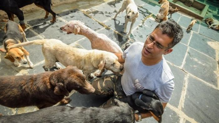 Software Engineer Spends His Spare Time Looking After 735 Abandoned Dogs