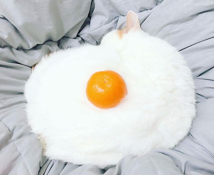 cat-orange-look-like-egg-photoshop-battle-original