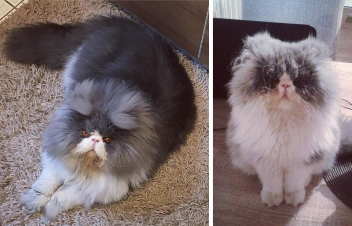This Sheep-Cat Has Some Of The Weirdest Fur We've Ever Seen