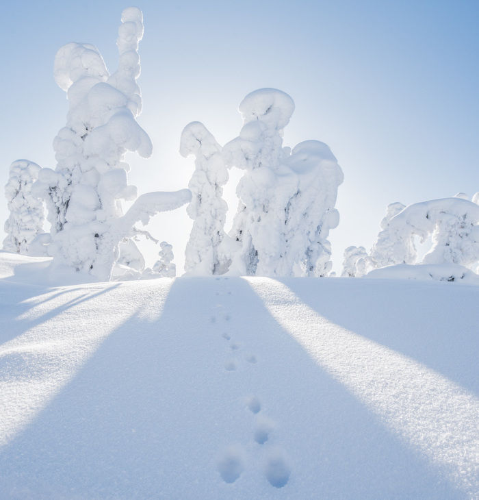 I Spent 2 Years Photographing Finnish Winter