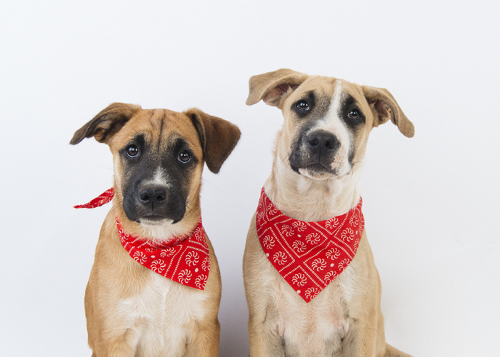 Saving Rescue Mutts One Photo At A Time