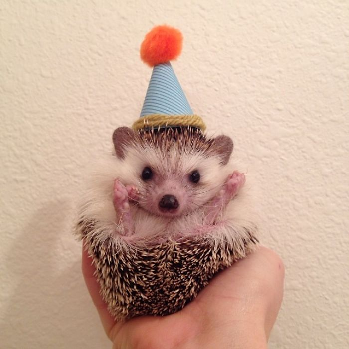 Cute-hedgehogs-in-hats