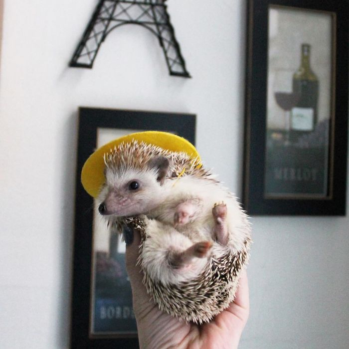 Cute-hedgehogs-in-hats