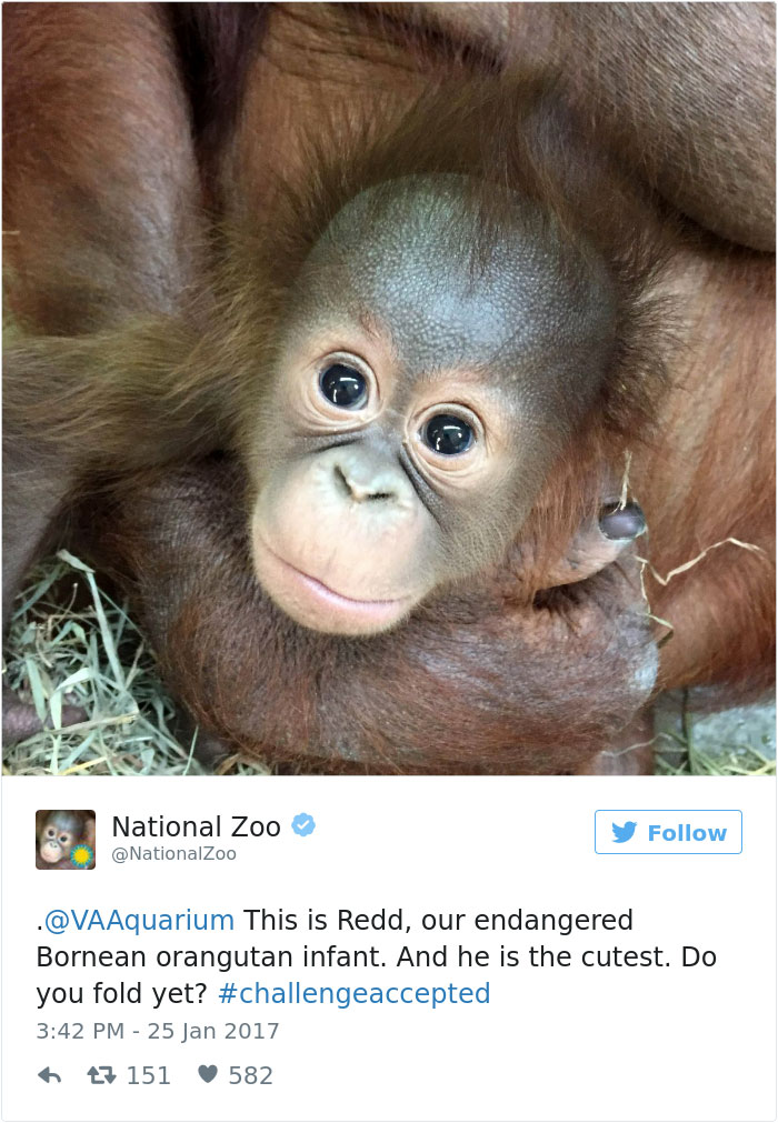 Zoos Get Into Brutal #CuteAnimalTweetOff Battle, And It's