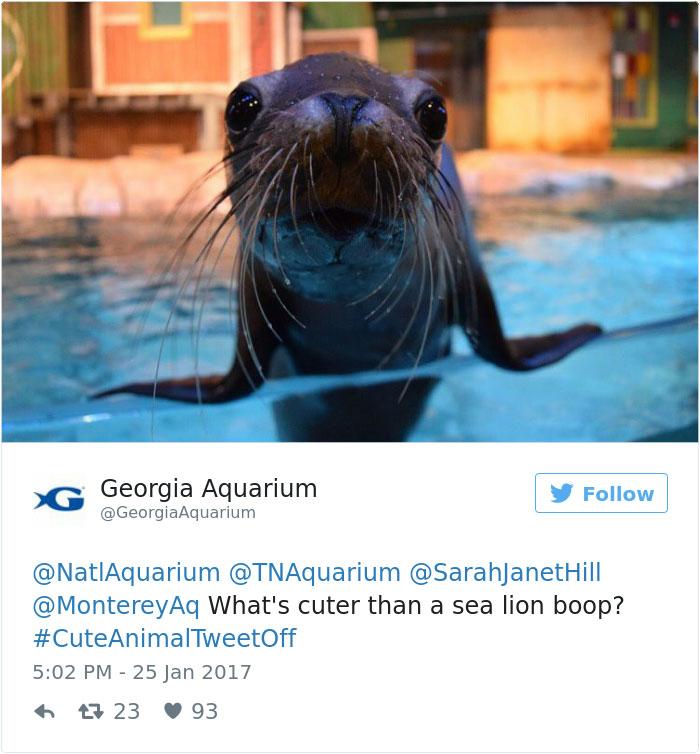 cute-zoo-animal-tweet-off-9