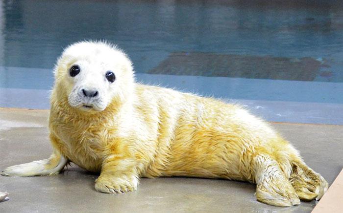 Varios zoos se meten en una brutal batalla de animales adorables en Twitter, y es exactamente lo que internet necesitaba