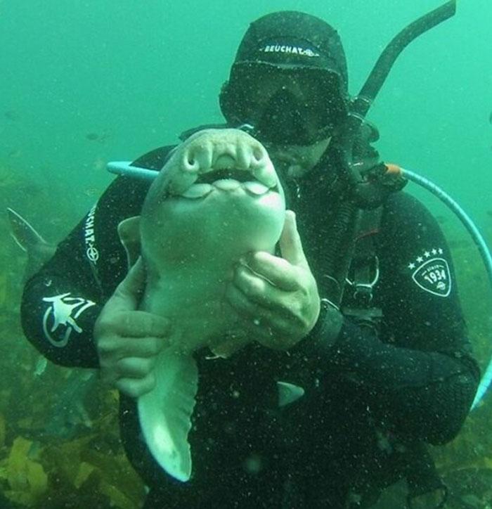 diver-cuddles-shark-rick-anderson-australia-1