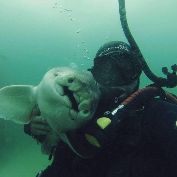 diver-cuddles-shark-rick-anderson-australia-2