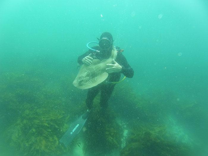 diver-cuddles-shark-rick-anderson-australia-5
