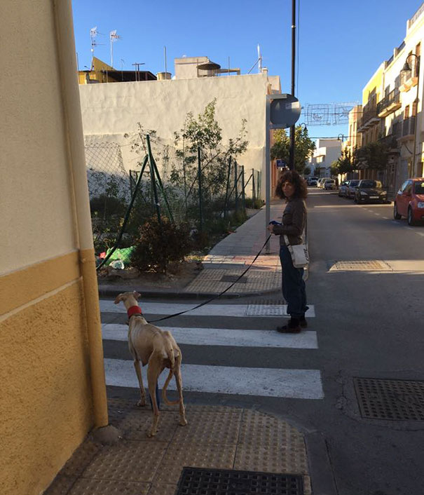 dog-mother-broken-leg-leads-vets-puppies-spain-5