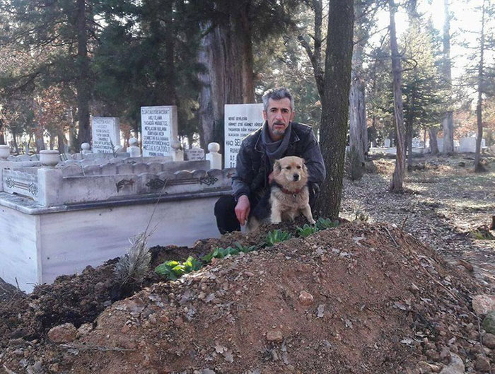 dog-visits-owner-grave-every-day-cesur-4