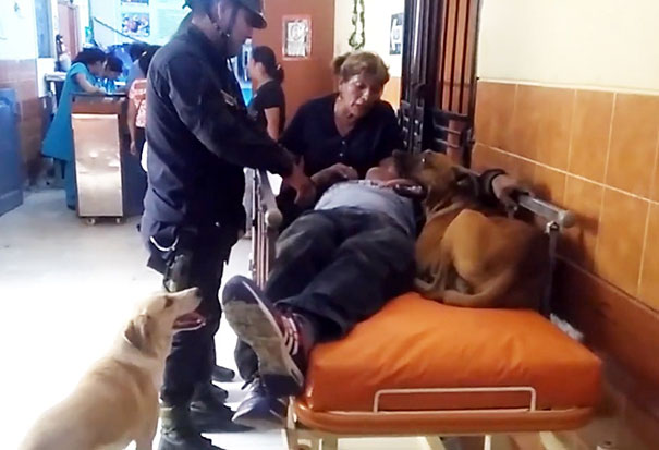 dogs-hop-ambulance-comfort-owner-peru-3