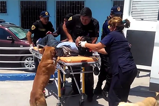 dogs-hop-ambulance-comfort-owner-peru-4
