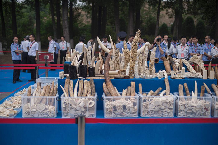 elephant-protection-ivory-sale-ban-china-3