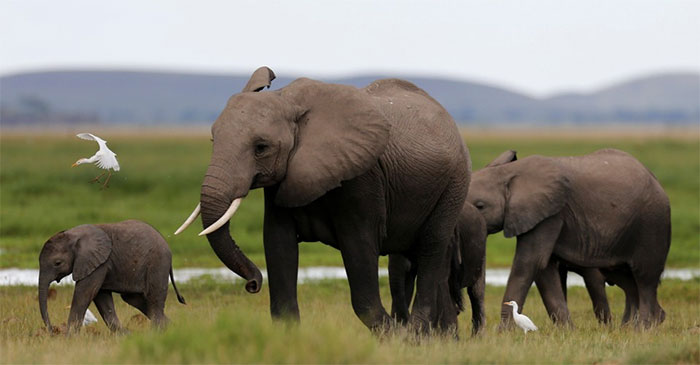 elephant-protection-ivory-sale-ban-china-8