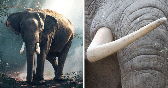 China Just Banned Ivory Sales, And That's Massive Step For The Protection Of Elephants Around The World
