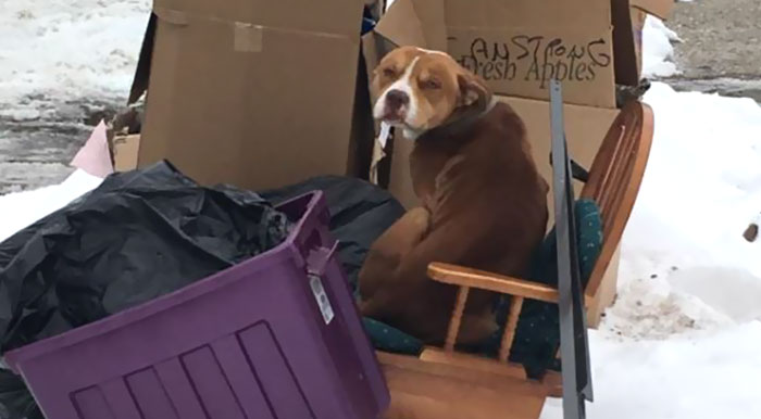 This Dog Was Left To Die In The Garbage After Family Moved Out, But He Kept On Waiting For Them