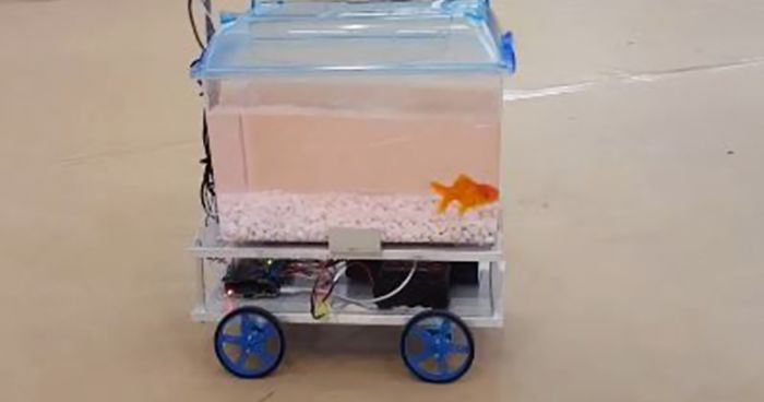 This fish can decide where to go by controlling its for Robo fish tank