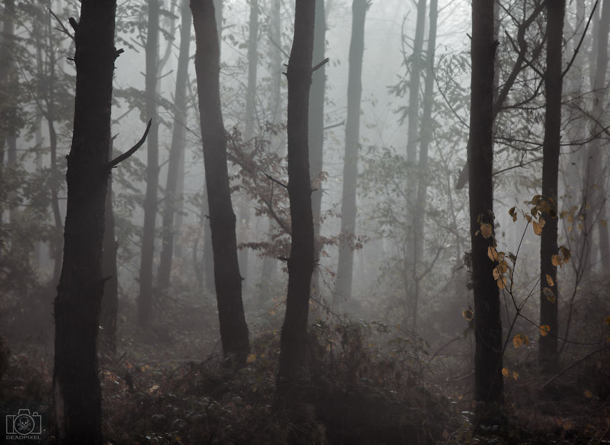 Like To Take Photos In The Mist