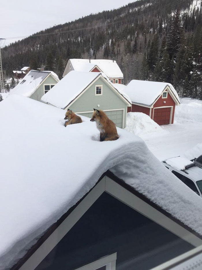 fox-family-access-rooftop-snow-andy-carver-1