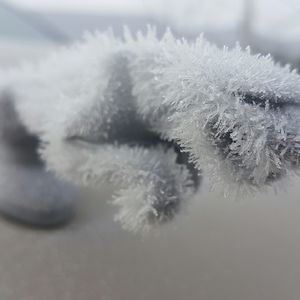 My Jaguar Hood Ornament Has Ice Fur
