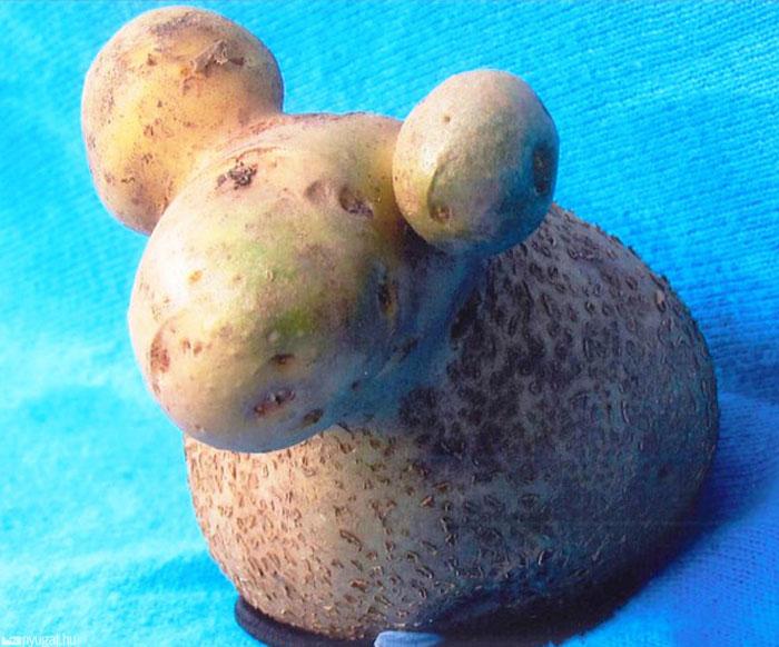 Potato That Looks Like A Sheep