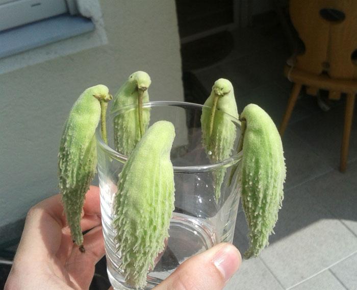 FunnyShaped Fruits Vegetables That Will Make You Look Twice - 20 funny fruits and vegetables looking exactly like something else