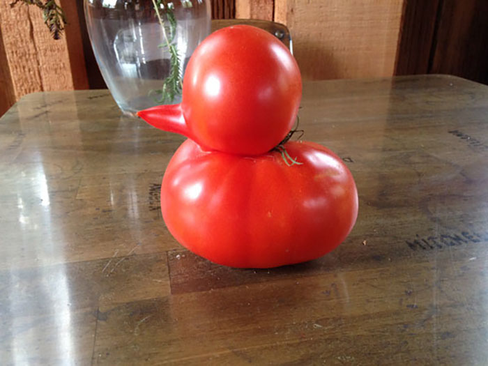 Duck-Shaped Tomato