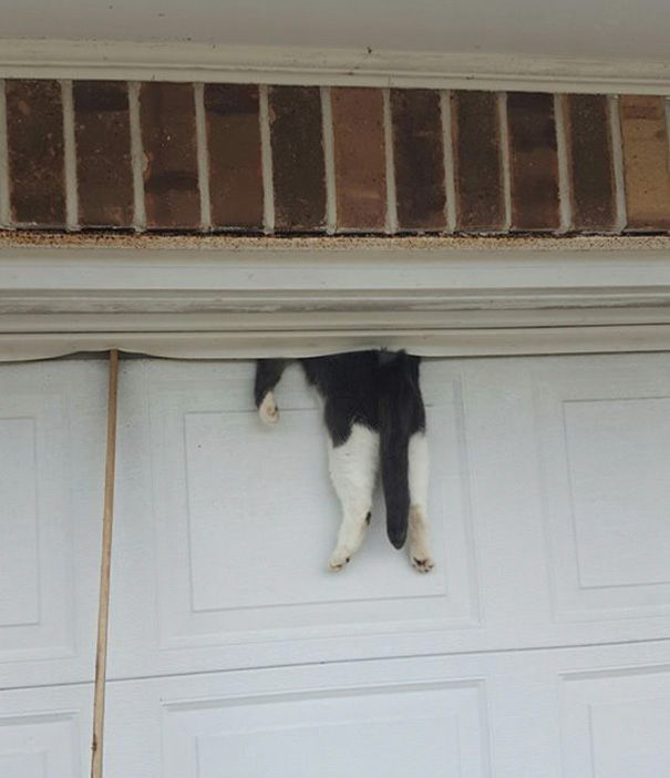 Cat Just Learned What Happens When You Sleep On The Garage Door (Don't Worry, He's Fine!)
