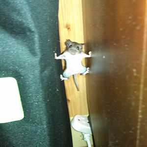 A Mouse That Went Into Mission Impossible Mode In My House