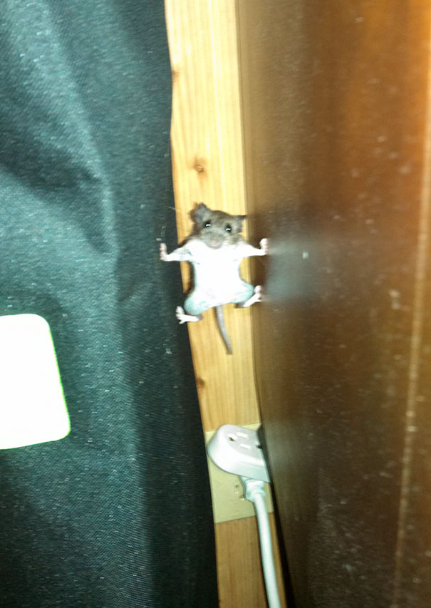 A mouse that went into Mission Impossible mode in my house last year