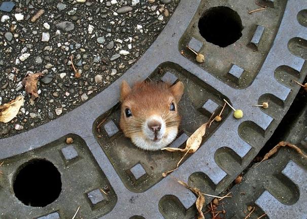 Little Guy Is Stuck