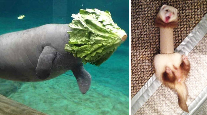 58 Of The Funniest Animal Fails Ever