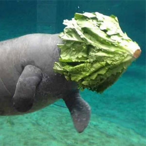 13+ Of The Funniest Animal Fails Ever