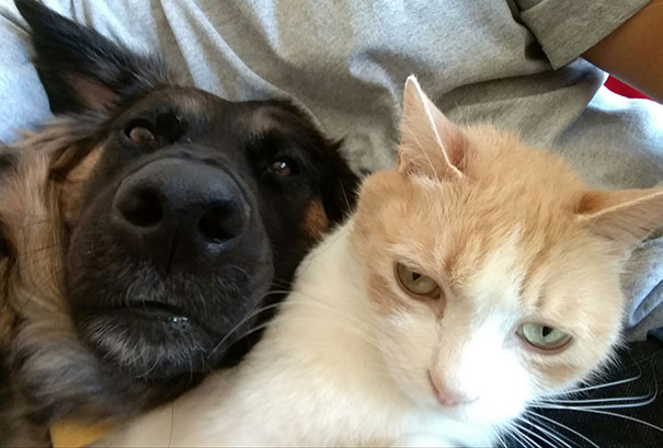 When My Dog Wants To Do A Selfie While My Cat Wants Nothing To Do With It