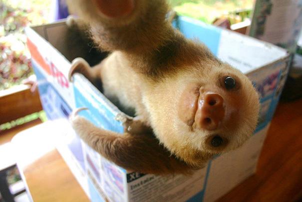 Baby Sloth Selfie