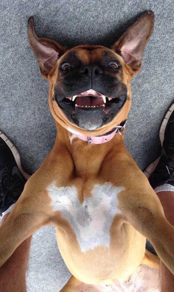 Bella Takes A Selfie