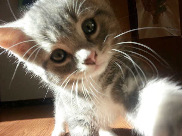 Kitten Selfie: The Very Best Kind Of Selfie