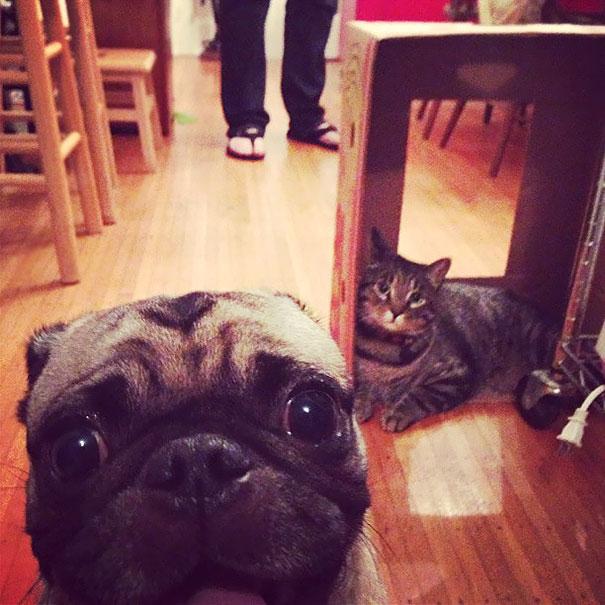 What Cat?