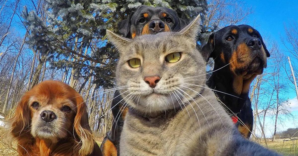 107 Animals Taking Selfies That Will Make You Smile