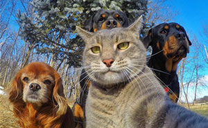 10+ Animals Taking Selfies That Will Make You Smile