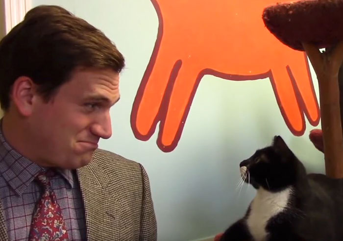 funny-cats-commercial-furkids-animal-shelte-1