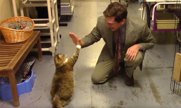 Animal Shelter Tries To Make Hilarious Low-Budget Cat Commercial, It Goes Viral Beyond Their Expectations
