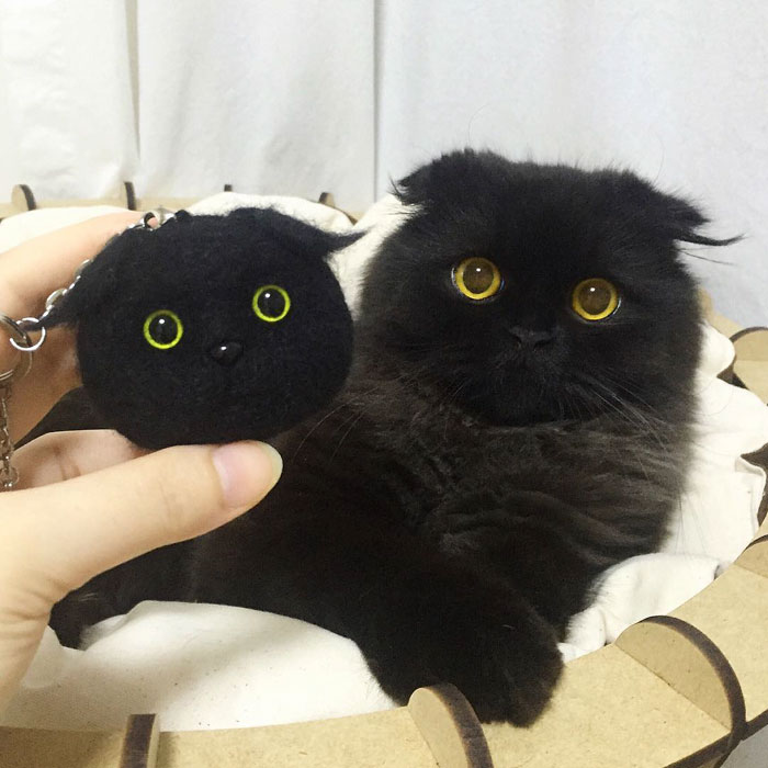 This Furball Looks Like Studio Ghibli S Soot Sprite 104