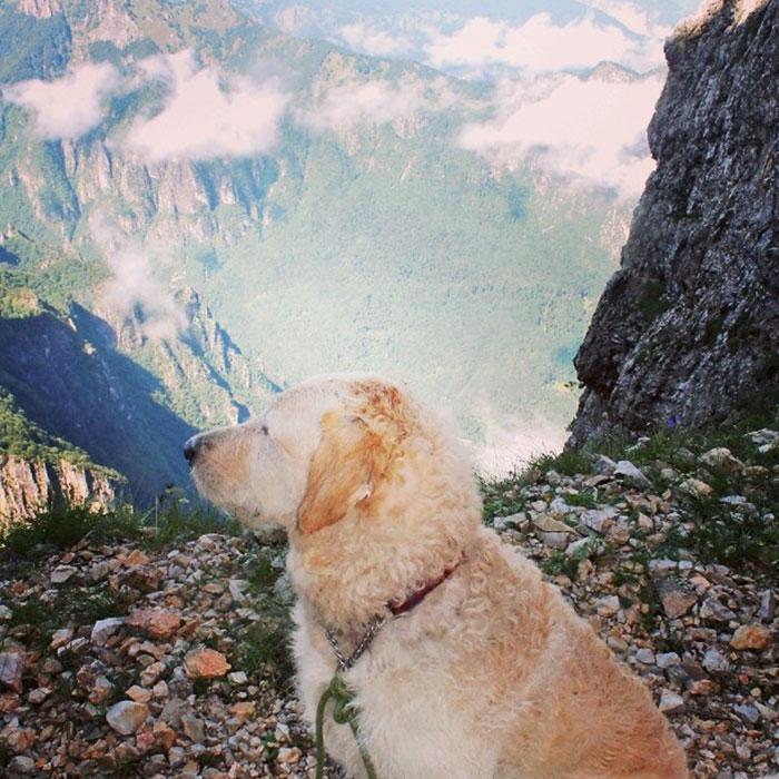girl-restores-van-travels-with-dog-marina-piro-14