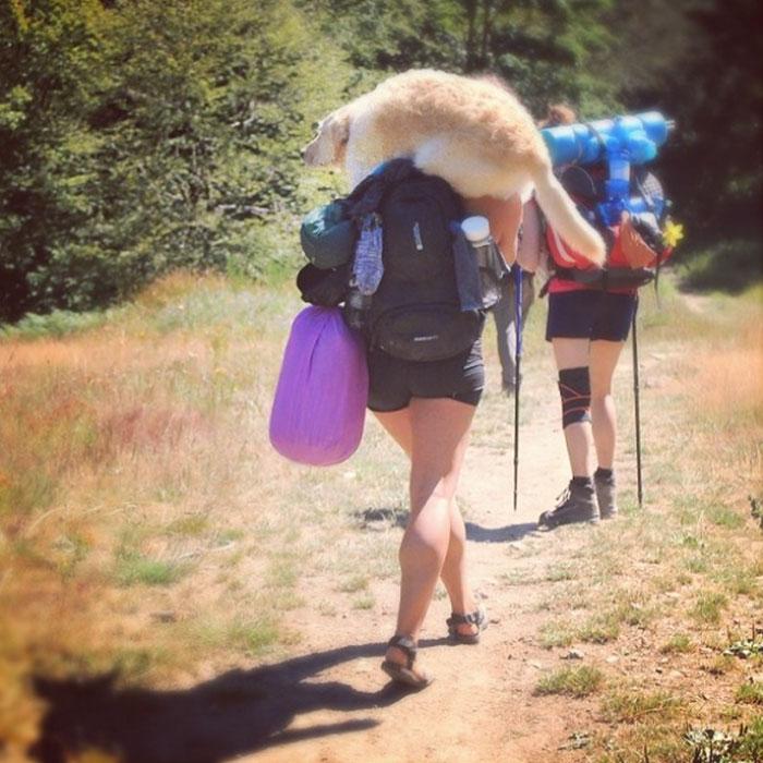 girl-restores-van-travels-with-dog-marina-piro-4